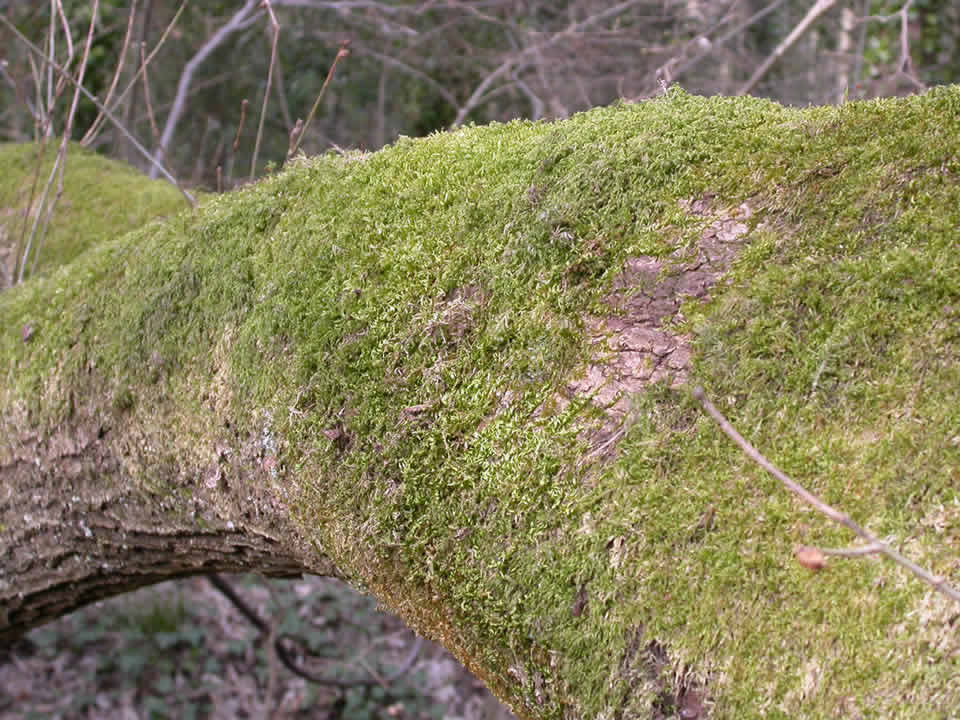 Image of a very mossy tree